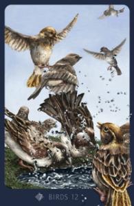 12-birds-extra